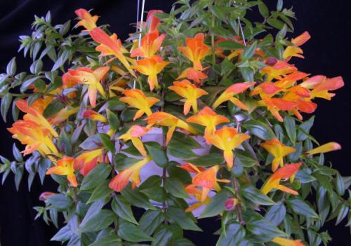 Комнатные цветы их фото и названия