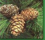 Орехи – подарок матушки Природы (часть 2)