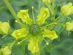 Противопоказания к применению лекарственных растений
