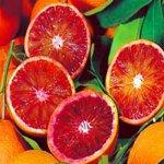 Самые полезные апельсины