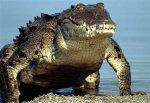 Почему крокодилы плачут