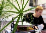 Растения в офисе. Преимущества