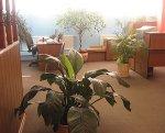Растения в офисе. Недостатки